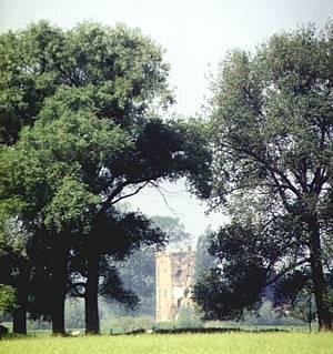 De ruïne van Nijenbeek in 1996.
